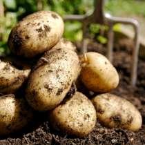 Продам деревенский картофель, в г.Волоколамск