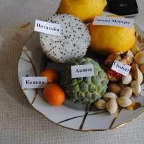 Экзотические и редкие семена и саженцы, в Санкт-Петербурге
