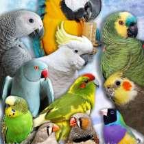 Приют для попугаев- в семье, в Москве