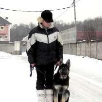 Дрессировка собак, коррекция поведения, в Москве