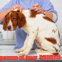Чипирование животных в Москве. Выезд на дом, в Москве
