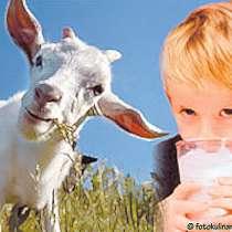 Молоко коровье от 100 руб, в Подольске