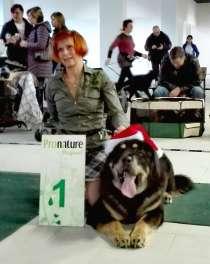 Подрощенный щенок тибетского мастиффа, в Санкт-Петербурге