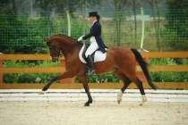 Занятия конным спортом, в Москве