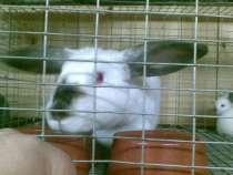 кроликов, в Нижнем Тагиле