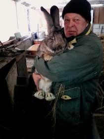 Племенные фландеры, в Барнауле