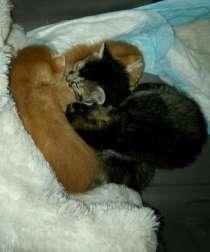 Рыженькие и тёмненькие котята ищут свои хозяев, в Новосибирске