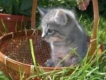 Отдам даром Отдадим в добрые руки котят, в г.Пушкино