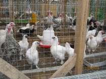 Мясо домашней птицы, в Москве