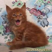 Котёнок мейн кун красный солид - Маврикий, в Красноярске