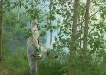 Уничтожение клещей комаров ос и клопов СЭС в Зарайске, в г.Зарайск
