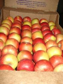 Яблоки оптом, в г.Самара