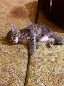 Котенок в добрые руки, в Новосибирске