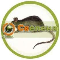 Уничтожение крыс и мышей в Москве и области, в Москве