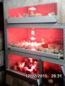 Комбикорма для кур и кроликов, в Ульяновске