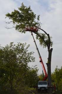 Спил аварийных деревьев, в Белгороде
