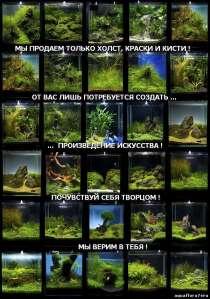 Аквариумные растения., в Челябинске