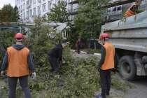 Спилить дерево в Белгороде и Белгородской области, в Белгороде