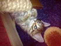 Отдам котенка в добрые руки, в Оренбурге