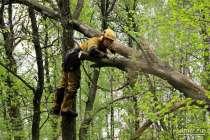 удаление аварийных деревьев в домодедово, в Домодедове