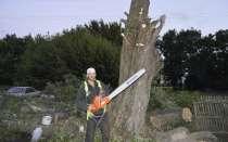 Удаление деревьев любой сложности в Горшечном, в Курске