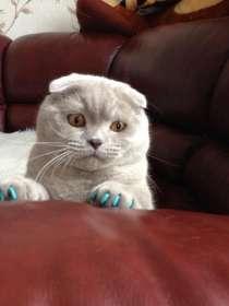 Продаются антицарапки для кошек, в Казани