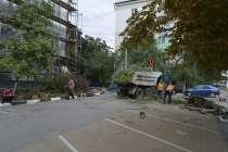 Спил, кронирование, валка деревьев, в Белгороде