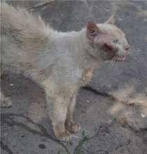 Помощь бездомным животным, в Туапсе