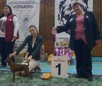 цвергпичер( миниатюрный пинчер, минпин) щенки-продаются!, в Екатеринбурге