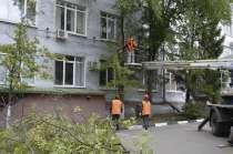 Спилить дерево любой сложности в Белгороде, в Белгороде