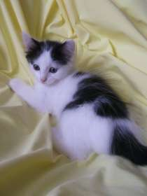 Отдам котят, в Новосибирске