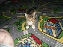 отдам кошку в добрые руки, в Каменске-Уральском