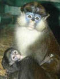 заведите обезьянку, в Красногорске