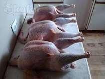 Мясо Домашней Индейки, в Липецке