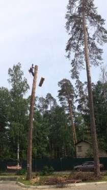 Спилить, удалить дерево в Лыткарино,Верхнее Мячково,Сосновый, в Лыткарино