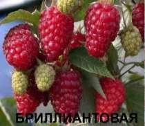 Малина лучших сортов, в г.Крымск