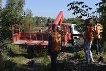 Спил, валка деревьев любой сложности, в Белгороде