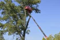 Спил деревьев, удаление деревьев, в Белгороде