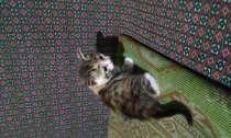 отдам котенка, в Ростове-на-Дону
