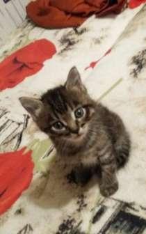 Два котёнка в добрые руки 89107966604, в Нижнем Новгороде
