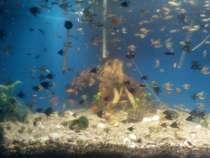 Рыбки, в Сургуте