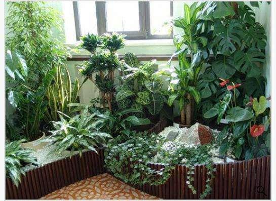 Уход за комнатными растениями Зеленая Ноль Три