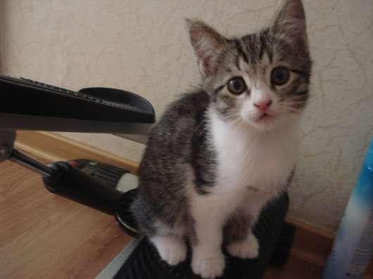 Отдам котят в добрые, заботливые руки!