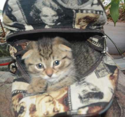 Предлагаются котята в Москве Фото 1