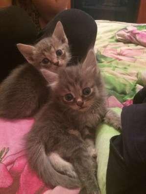 Котята даром в Казани Фото 2