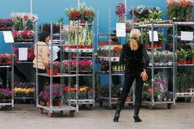 Тележки, тролли. Тележки б/у, для транспортировки горшечных растений.