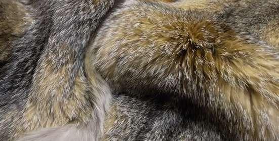Шкурки лисы грей фокс