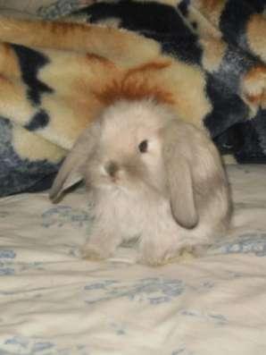 Декоративные вислоухие крольчата в Березниках Фото 3