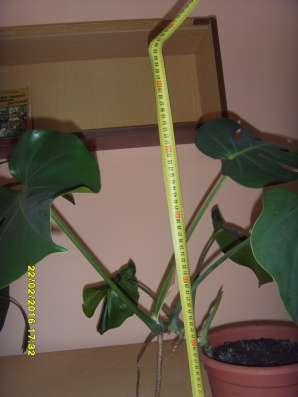 Экзотические тропические растения для дома и офиса
