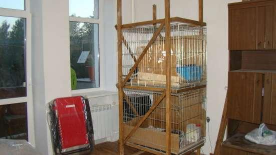 Содержание щенков и кошек в клетке